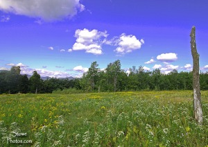 Stowe Hollow Meadow, Stowe, Vermont