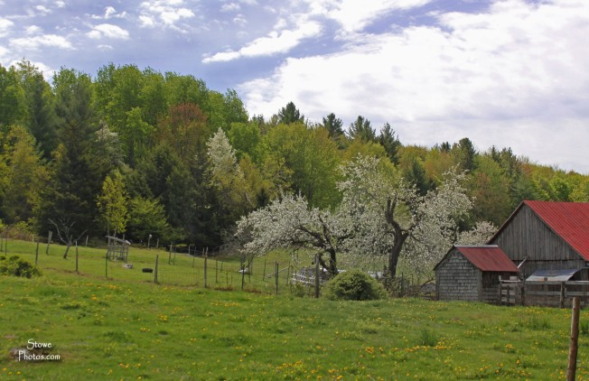 Stowe, VT - Farm on Brownsville Road