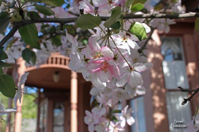 Stowe, VT - Springtime in Stowe Village