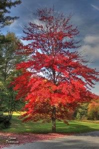 2014 sep 28 birch hill red tree