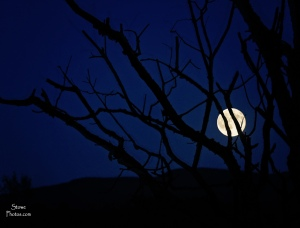 2015 7 31 moon and tree updated