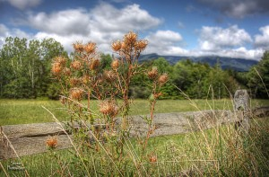 Stowe Vermont - Edson Hill Road - August weeds with Mt. Mansfield