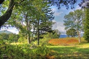 Stowe Vermont, August Field