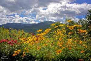 Stowe, VT - Meadow of Color and Worcester Ridge Mountains