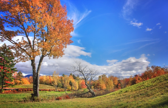 Stowe, VT - October 14, 2015 - Trees along Sanborn Hill Road