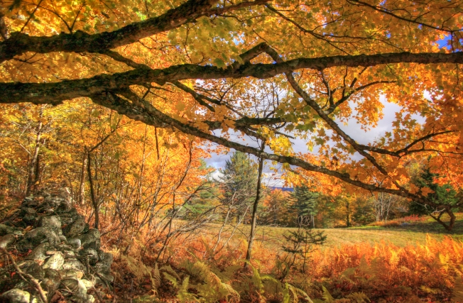 Stowe, VT - foliage along Sanborn Road - October 14, 2015