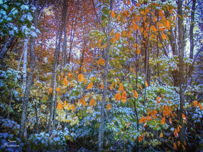 Stowe, Vermont - Snow and Foliage - what a great combination!  October 18, 2015