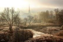 2015 12 7 scc tree fog