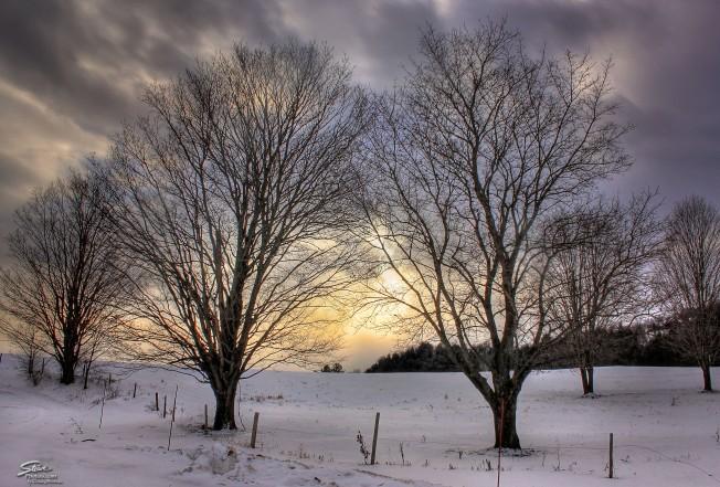 2016 1 14 trees