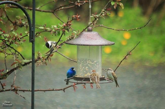 2016 5 22 blue bird and friends