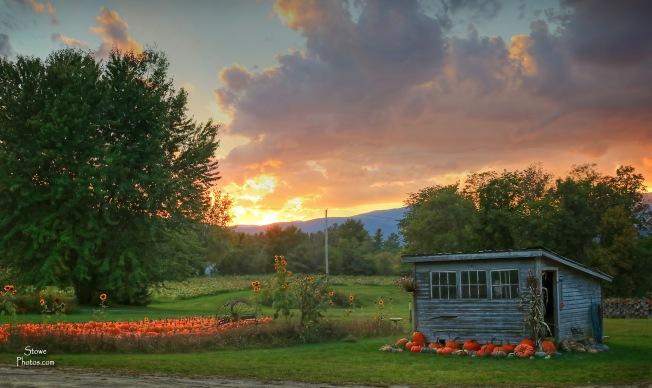 2016-9-20-stowe-pumpkins-a