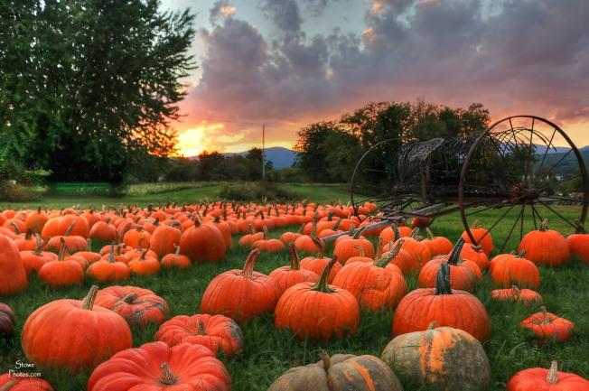 2016-9-20-stowe-pumpkins