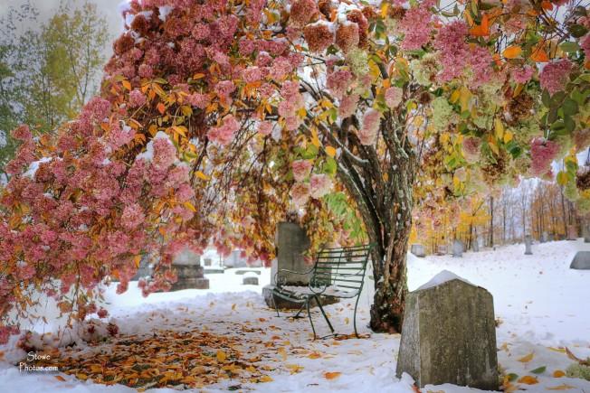 2016-10-23-hyde-park-grave-yard