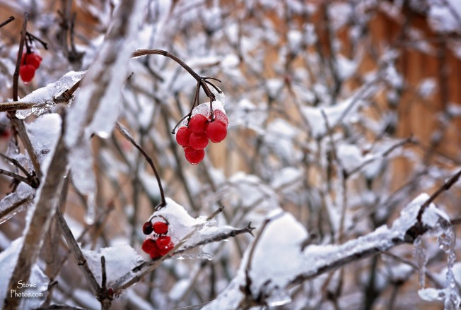 2017-1-25-stowe-berries-weeks-hill