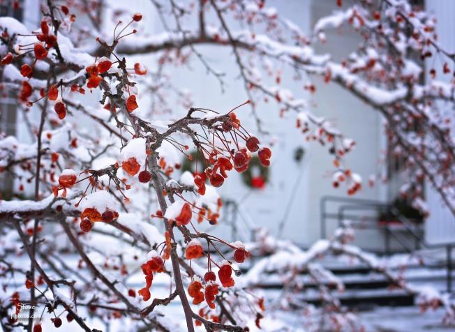 2017-1-25-stowe-frozen-berries