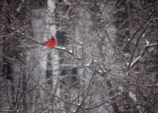 2017-1-24-cardinal-bandw