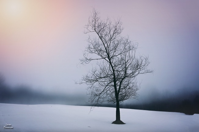 2017 3 28 stowe tree foggy