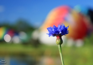 2017 7 9 balloon and flower