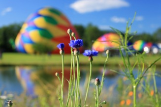 2017 7 9 balloons and flower