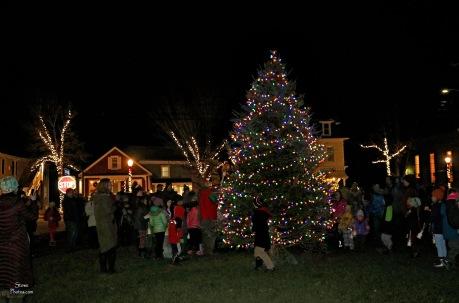 2017 12 1 tree SP