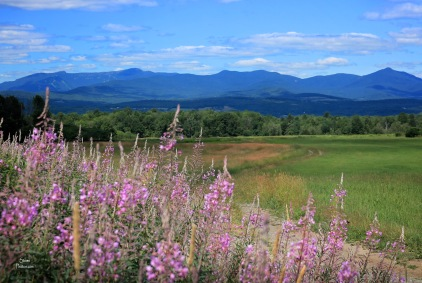 2018 07 19 elmore flowers fields mountains
