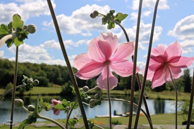 2019 09 07 woodbury flowers
