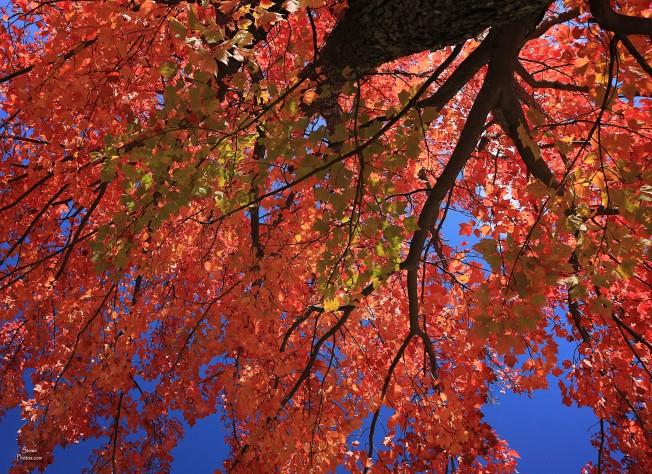 2019 10 08 robinson red tree