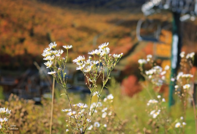 2019 10 08 spruce wildflowers