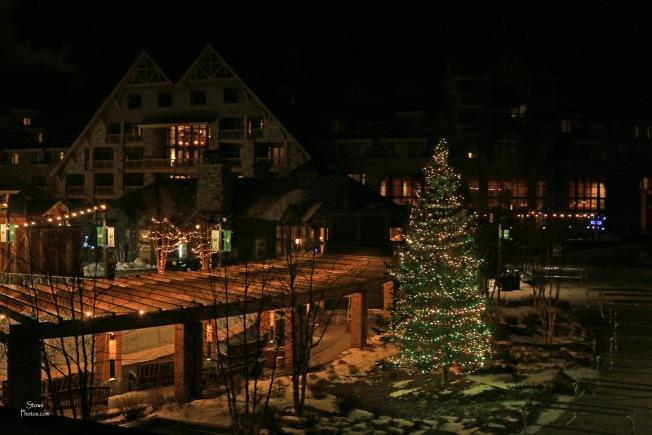 2019 12 12 spruce christmas tree